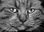 mystreetcat 1.jpg